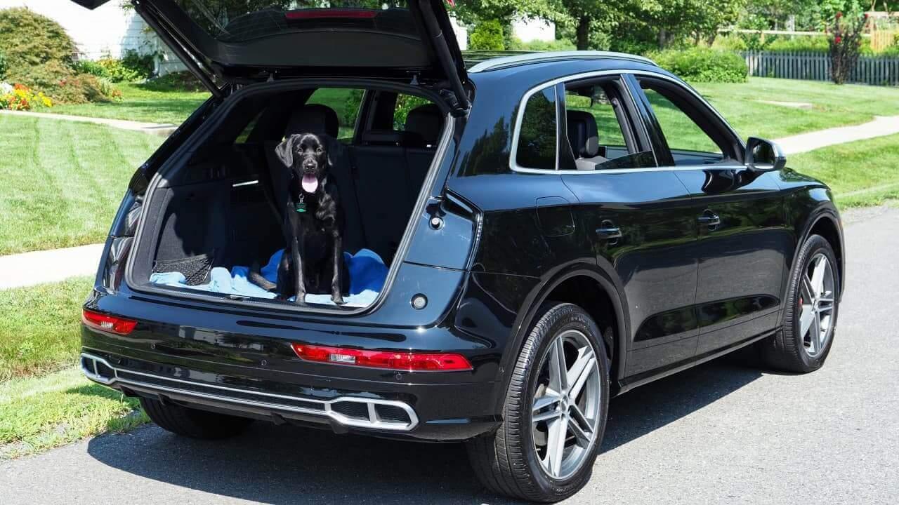 Audi SQ5 Dog in Boot