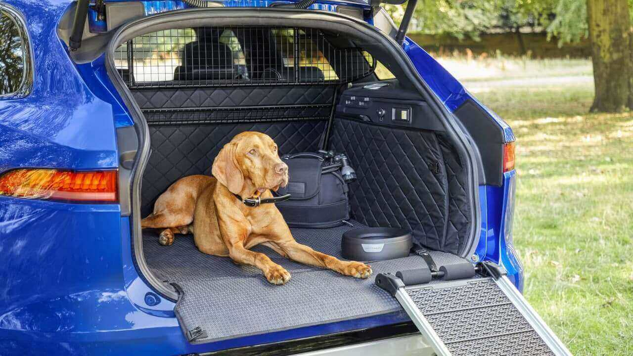 Jaguar F-PACE Dog in Boot