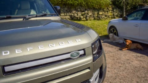 Land Rover Defender with Dogs