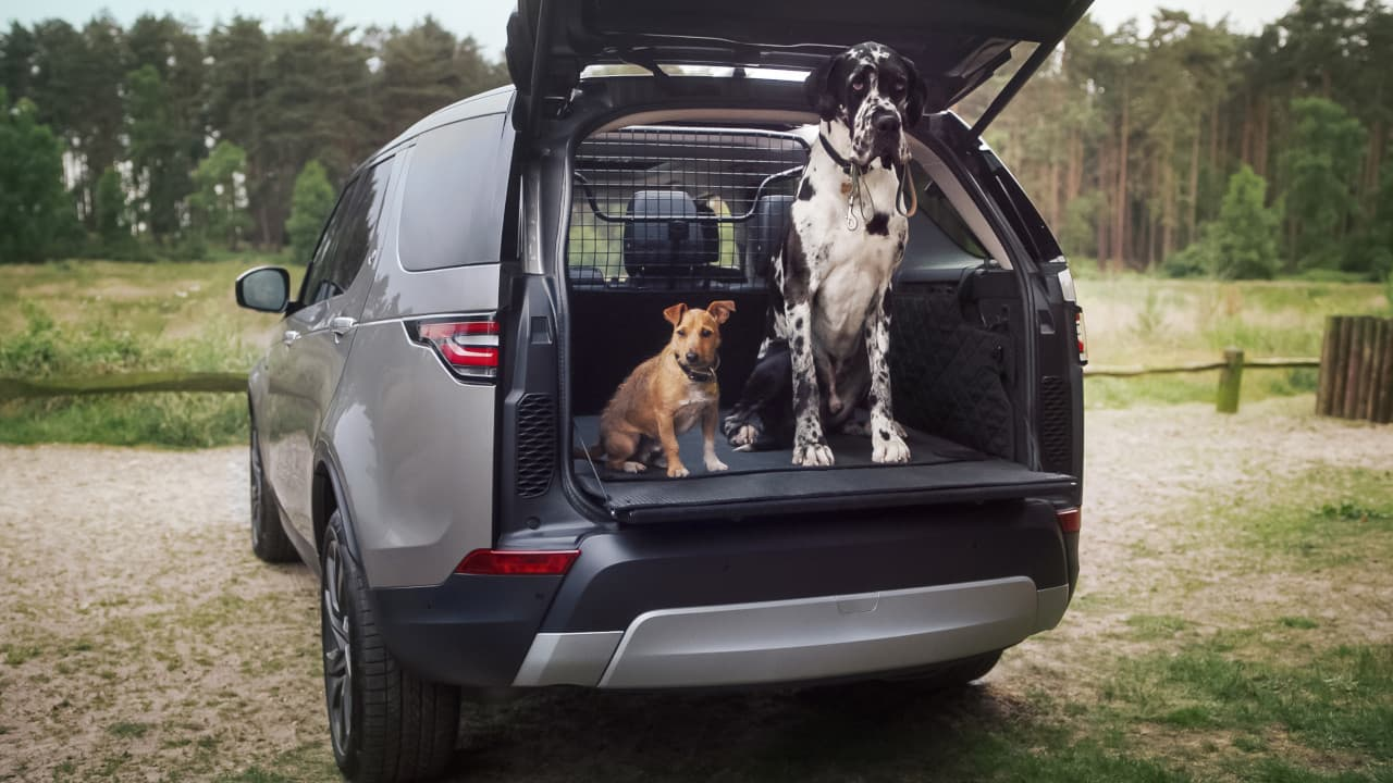 Land Rover Discovery Dog in Boot