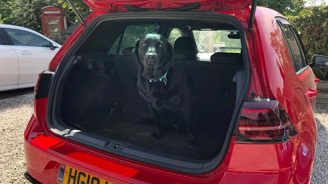 Volkswagen Golf R Dog in Boot