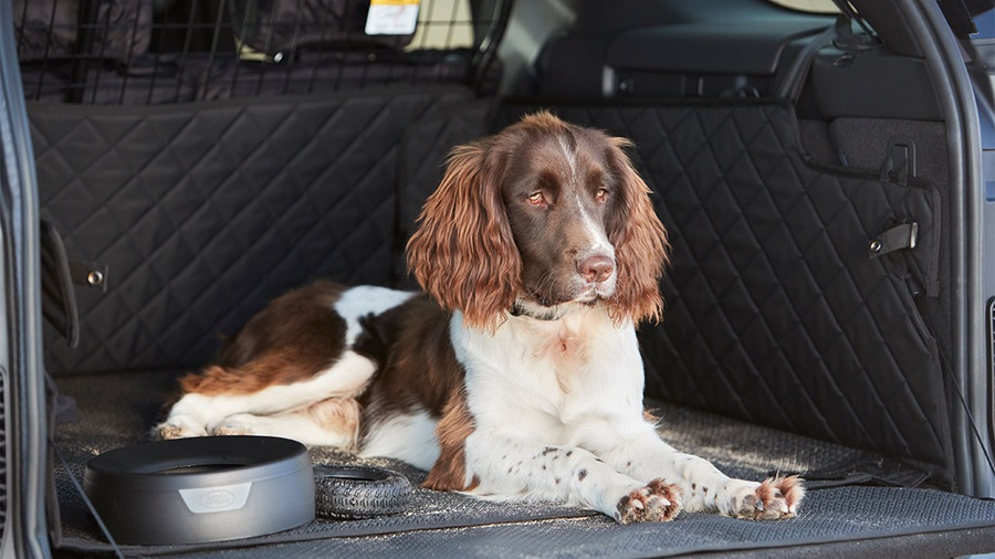 Dog sat in Land Rover Discovery boot